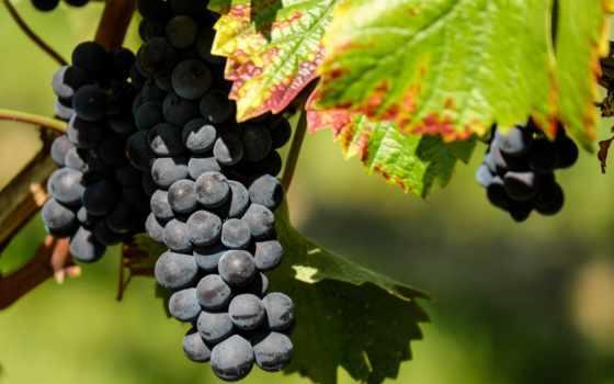 сентября, gismeteo, винограда, погода, симферополе, cosmetics,