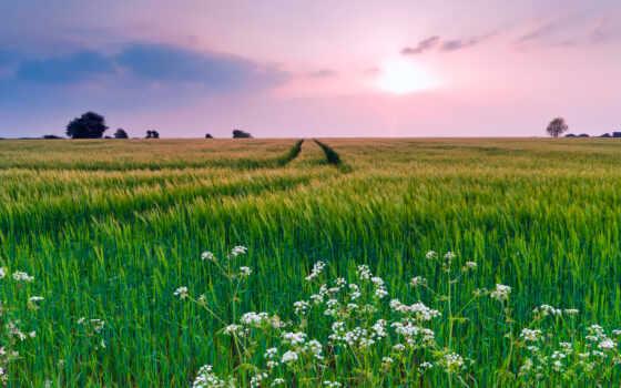 весна, природа, нравится, широкоформатные, cvety, поле, красивые, природы,