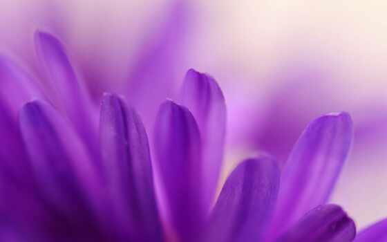 фотообои, сиреневый, лепесток, арта, color, цветы, стена, purple, день, россия, dark