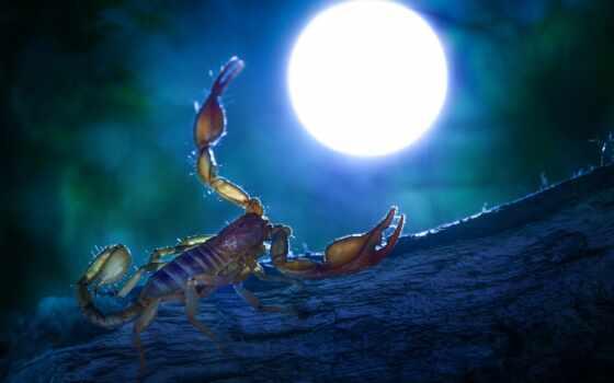 panizza, scorpion, alberto, among, восход