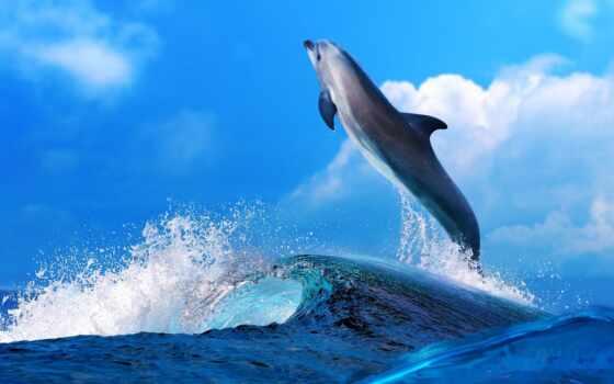 дельфин, прижок