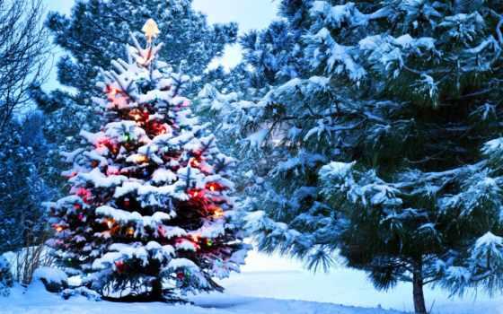 new, год, winter Фон № 58557 разрешение 2560x1600