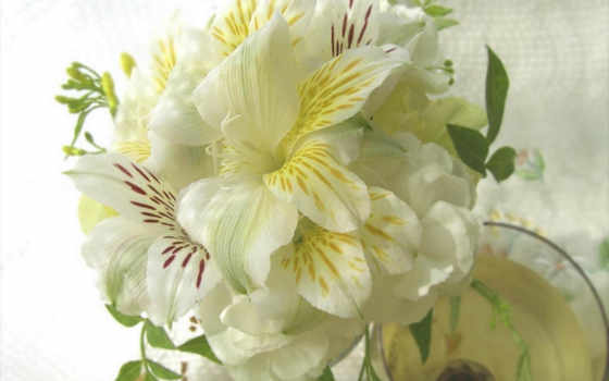 цветы, petunia