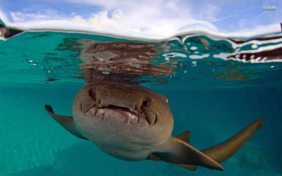 акула, sharks, медсестра
