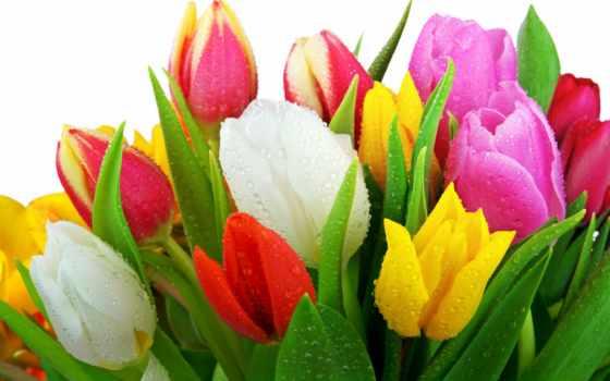 flowers, цветы, самый