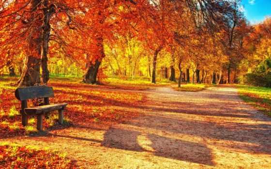 park, automne, parc, осень, скамейка, trees, листва, листья, des,