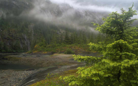 аляска, природа, аляски, туман, река, дерево, совершенно, свой,