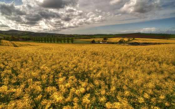 iphone, поле, flowers, небо, трава,