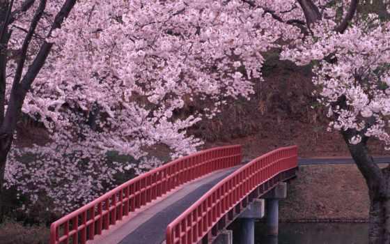 вышивки, garden, Сакура, схема, cherry, лепестки, яndex, крестом, весна, сады,