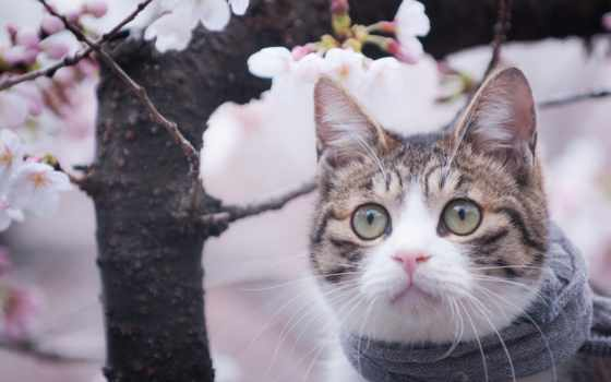 кот, очки, цветы, весна, cats, animal, fantastic,