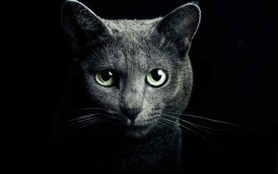 автор, кот, black, pillow, бросок, котенок, газа, хорошо, nice,