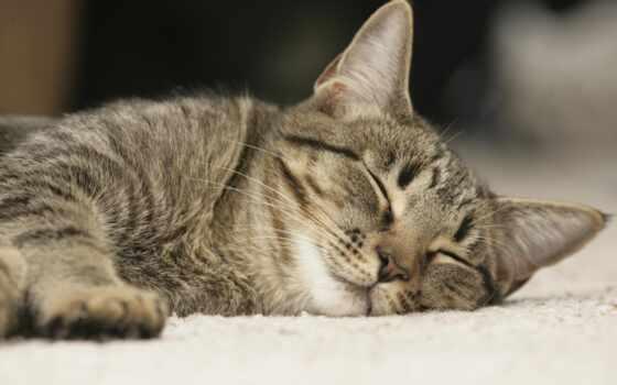 ночь, love, спокойствие, postcard, спать, кот, сладкое, shine, wish, тематика, род