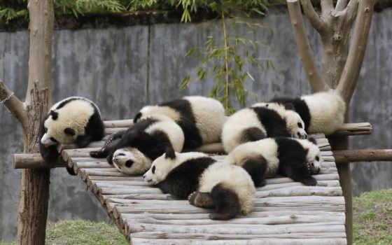 очень, утро, нравится, панда, eti, доброе, рейтинг, но, добрым, art, будет,