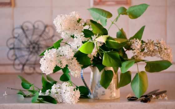 сиреневый, цветы, картинка