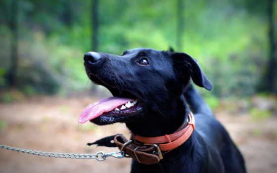 собака, черная, чему, снится, сонник, продолжительность, youtube, views,