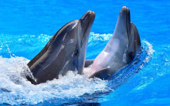 дельфины, water, блики, дельфинами,