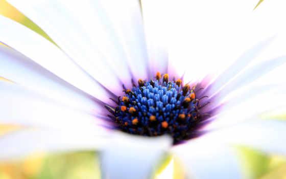 обои, цветы, цветок, белый, красивый, красивые, qu