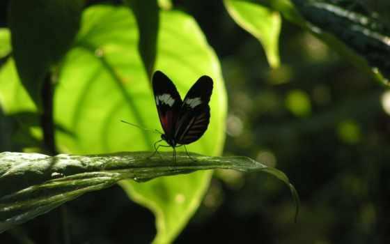 бабочка, насекомое Фон № 23953 разрешение 1920x1200