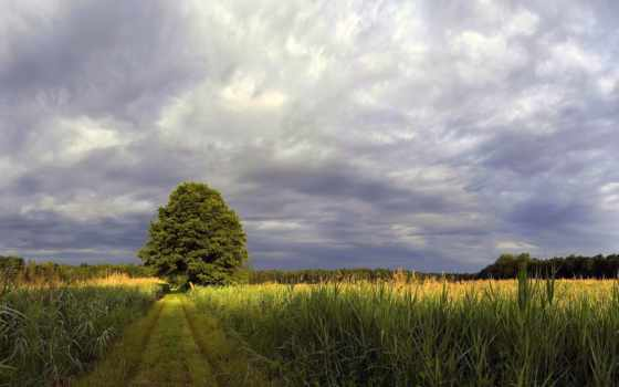 поле, дерево, margin, солнышко, trail, небо, distance, горизонт, лес, тучи,
