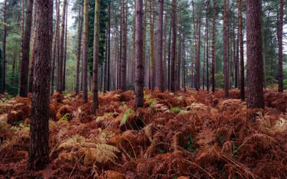 del, naturaleza, landscape, природа, forestales, trees, rboles, лес, paisaje, дерево, fondos,