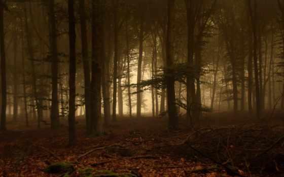 лес, foggy, trees, тумане, природа, ветки, туман,
