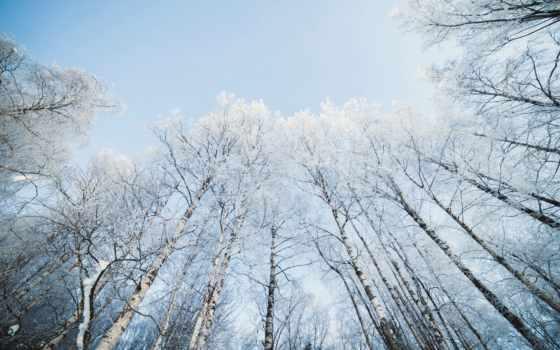 hintergrundbild, неба, береза, голубого, fone, березы, natur, tapety,