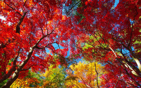 осень, листва, trees, картинка, природа, небо, amazing, purple,