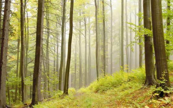 лес, high, desktop, resolution, definition, free, widescreen,