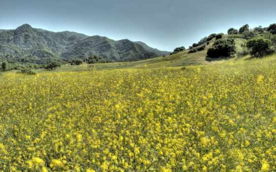 поле, blooming, fondos, isles, пейзажи -, rizzoli, flor, desktop, indian,