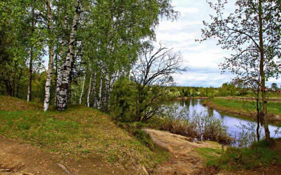 березы, ярославль, russian, природа, trees, reki, которосль,