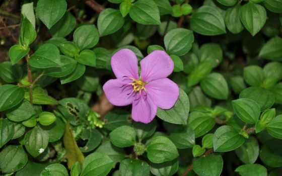 lanka, flowers, months, garden, flower, ago, nature,