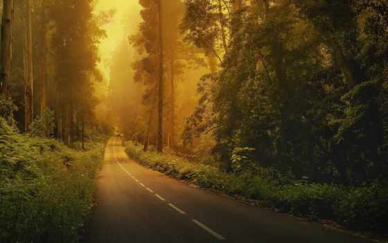 дорога, les, лесу