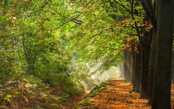liście, drzewa, las, drzew, осень, szpaler, poziom, jesień, drzewo, флот,