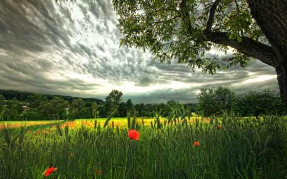 поле, красивое Фон № 88555 разрешение 2560x1600