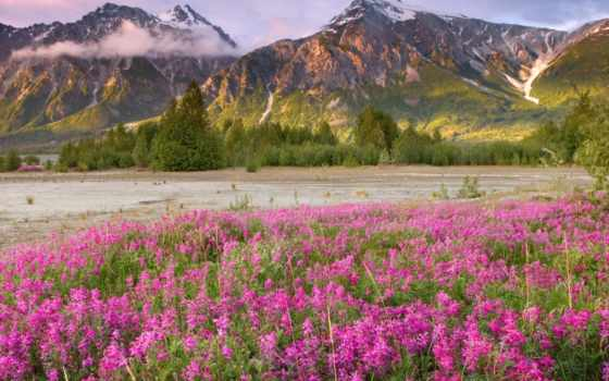 горы, красивые, priroda, британской, kanada, колумбии, канада, титон, вайоминг,