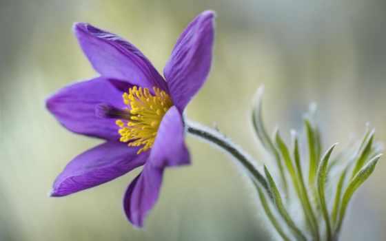 цветы Фон № 103147 разрешение 1920x1200
