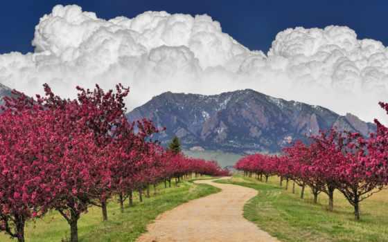 весна, trees, цветущие, природа, дорога, горы, цветение, страница, fone, деревьями, цветущими,