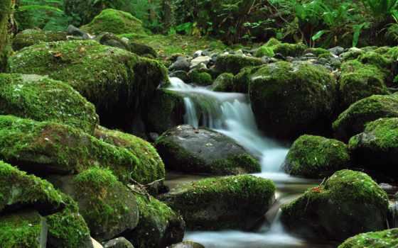 камни, ручей, зелёный, водопад, камней, мох, мхом, among, лес, листва, трава,