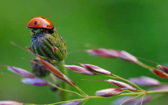 deviantart, this, смотреть, kwiatkowski, you, top, ladybug, растение, little,