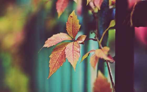 осень, листва, сухие, оранжевые, природа, желтые, трава,