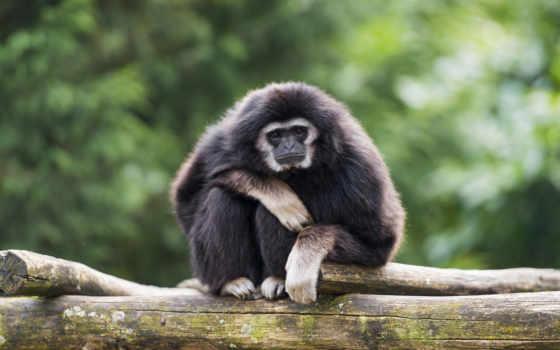 animal, обезьяна, high