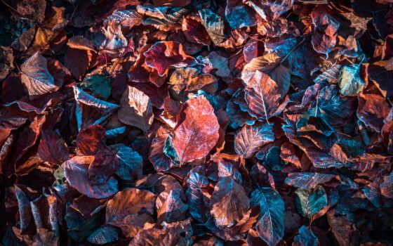 top, leaf, осень,