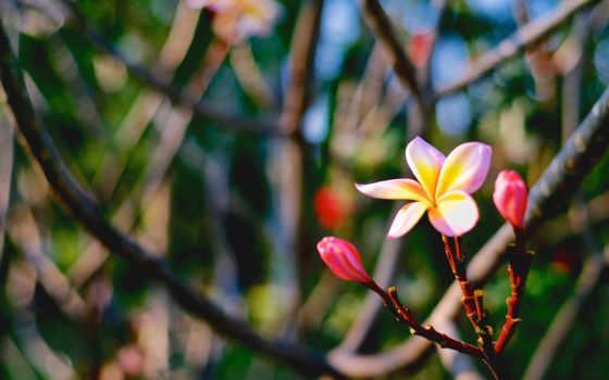 цветы, страница, можно