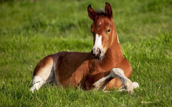 лошади, лошадь, лошадей