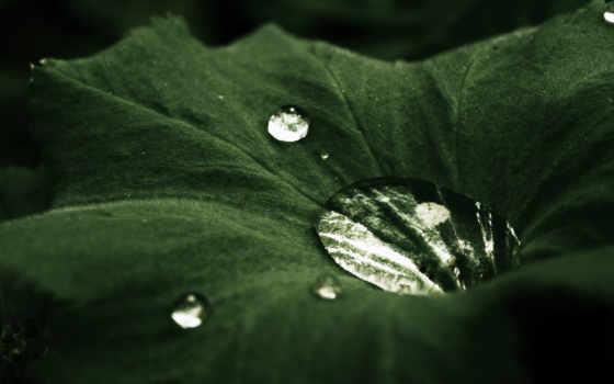 капля, priroda, makro, категория, совершенно, капли, росы, листь, zastavka, rosa,
