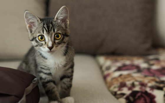 кошки, теме,