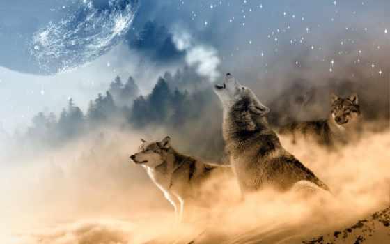 волк, you, волки, луна, hats, wolves, howling,