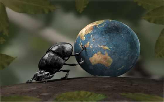 world, где, катится, this, было, жук,