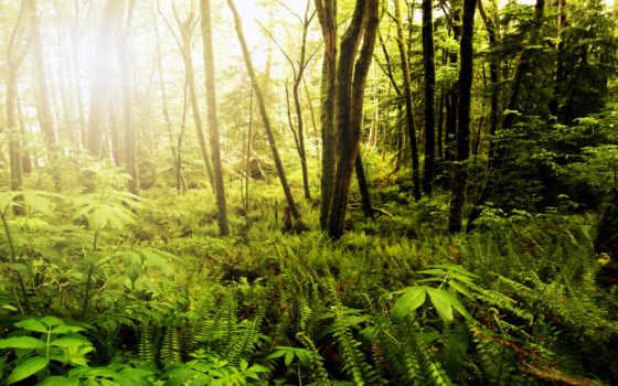 лес, tropical, дешевые, лесу, живопись, солнечный, aliexpress, calligraphy, товар, природа, свет,