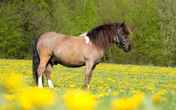 лошадь, лошади, картинка, поле, zhivotnye, природа, animal, trees, травка, кот,